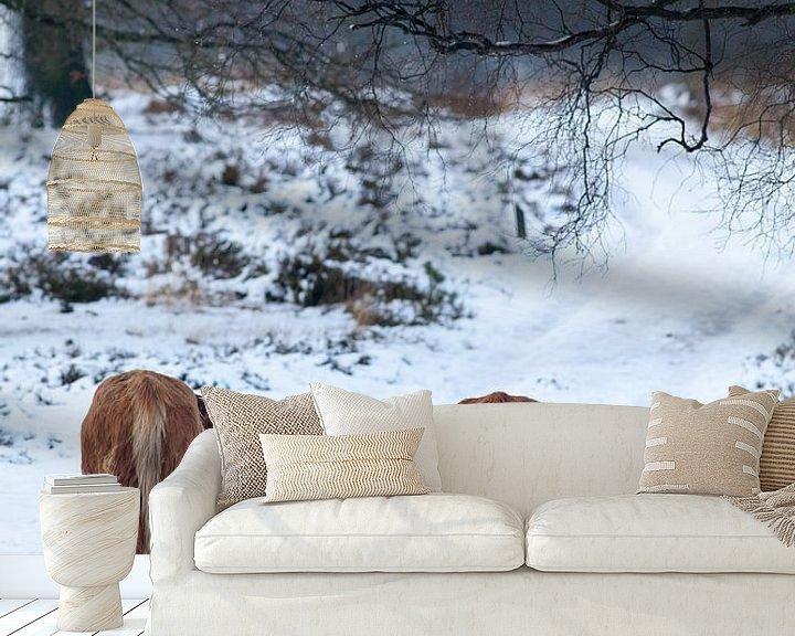Sfeerimpressie behang: Schotse Hooglander in de sneeuw, Deelerwoud van Evert Jan Kip