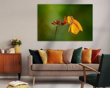 De oranje vlinder von Ralf Linckens