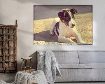 Puppy hond in de zon von Menno van der Werf