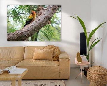Pappegaai in boom von Menno van der Werf