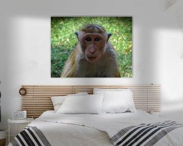 Schau mir in die Augen, Augenkontakt mit einem Affen von Rietje Bulthuis