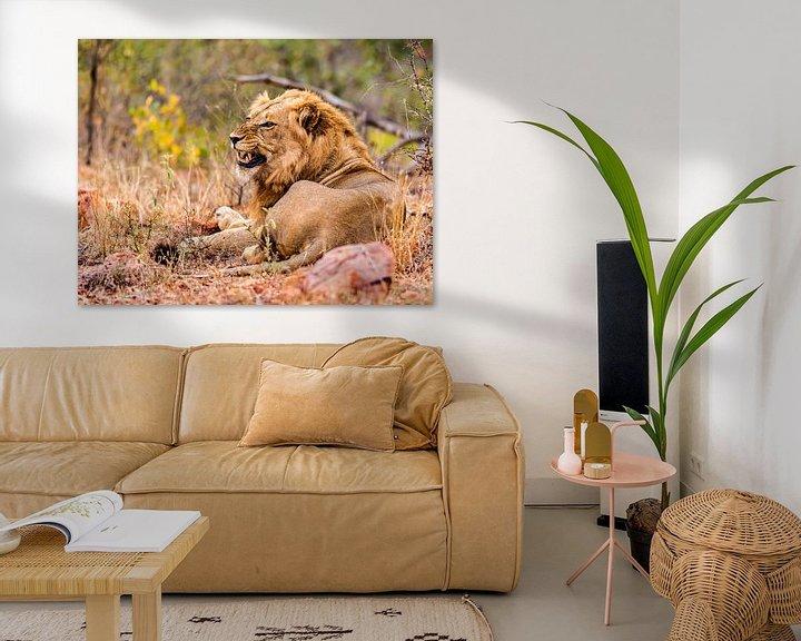 Sfeerimpressie: Leeuw, zoals een leeuw hoort te zijn. van Rob Smit