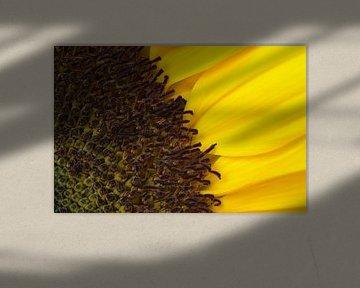 Detail van een zonnebloem van Margot van den Berg