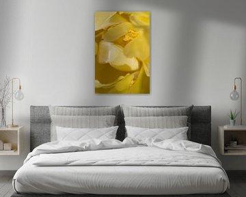 Tere gele tulp van Margot van den Berg