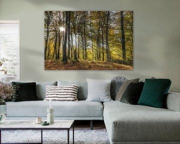 Forest in the autumn van Gunter Kirsch