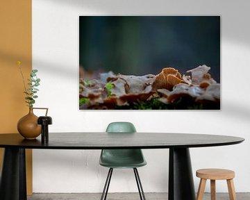Eekhoorntjesbrood van Jan Diepeveen
