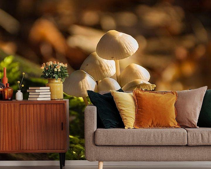 Sfeerimpressie behang: Paddenstoelen gehuld in zonneschijn van Jan Diepeveen