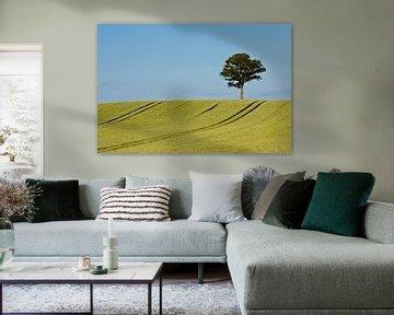 Baum auf einem Feld von Rico Ködder