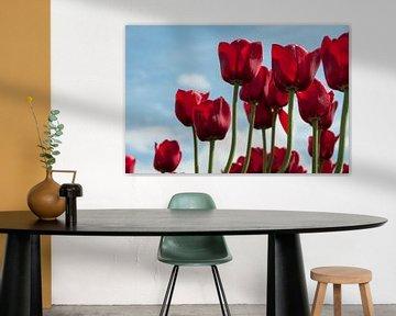 rode tulpen  van ChrisWillemsen