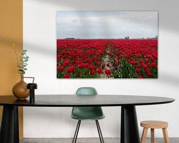 heel groot veld met ride tulpen van Compuinfoto .