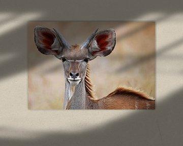 Kudu - Africa wildlife van W. Woyke