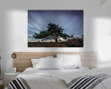 Dennenboom in de wind sur Sjoerd van der Wal