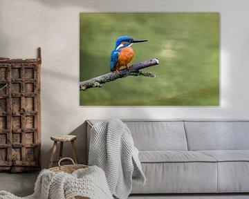IJsvogel in de lente van Sjoerd van der Wal