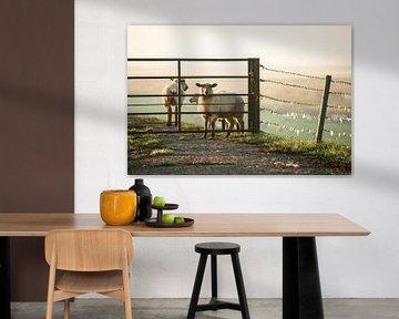 Schafe im Morgennebel van Annette Sturm