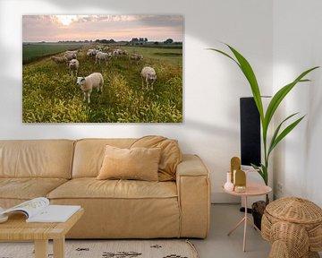 Schafen auf Texel  von Arjan Keers