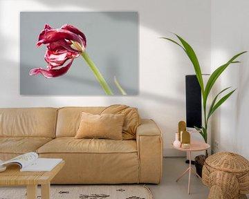 Tulip van Je Lo