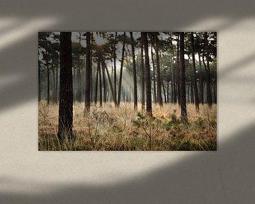 Ochtendzon tussen de bomen van H Verdurmen