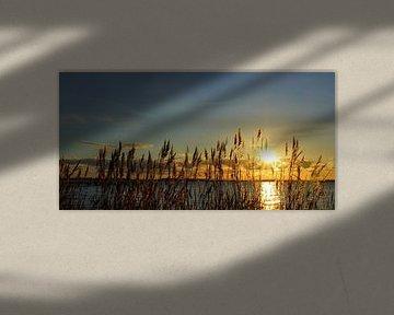 Wintersonne van Ostsee Bilder