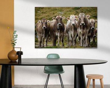 Koeienvergadering van Sean Vos