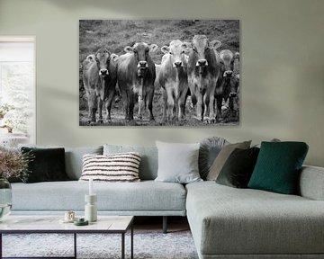 Koeienvergadering (zwartwit) von Sean Vos