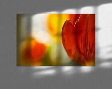 Rood en geel van Gonnie van de Schans