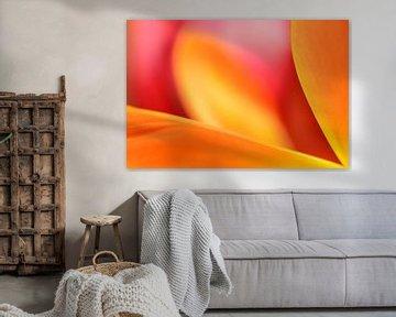 Vlammende kleuren in een tulp von Gonnie van de Schans