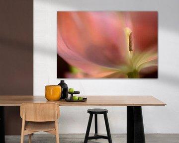 roze tulp met stamper sur Gonnie van de Schans