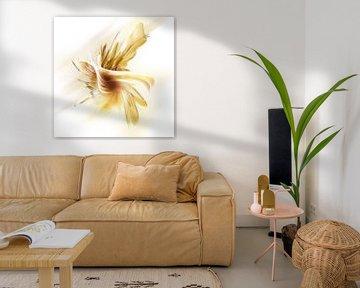 orchid fantasienemsis von Silvio Schoisswohl