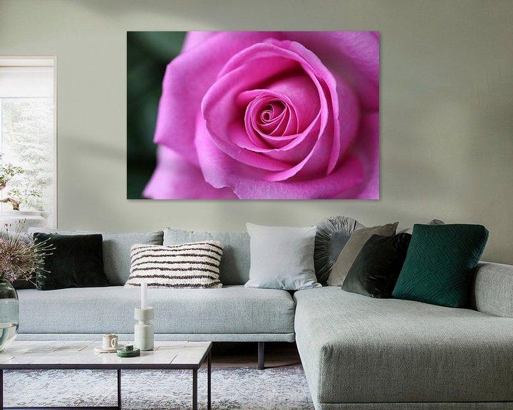 Sfeerimpressie: Roze roos van Edwin Butter