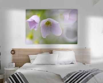 Teer paarse Pinksterbloem van Gonnie van de Schans