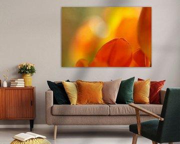 Rood geel oranje tulpen von Gonnie van de Schans