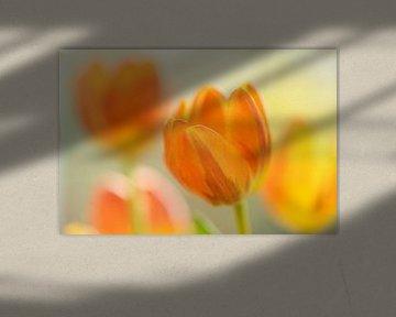 Geel oranje tulpen met vervaging von Gonnie van de Schans