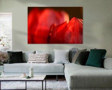 Rode tulp von Gonnie van de Schans