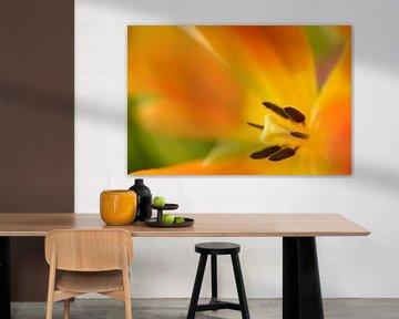 Kelk van een geel met oranje tulp van Gonnie van de Schans