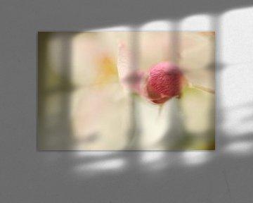 Wit met roze bloesem aan een appelboom van Gonnie van de Schans
