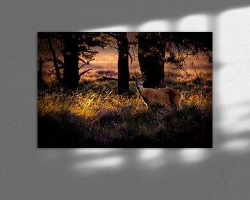Letztes Licht im Wald von jowan iven