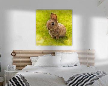 Baby Bunny van Silvio Schoisswohl