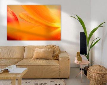 Geel oranje rood van Gonnie van de Schans