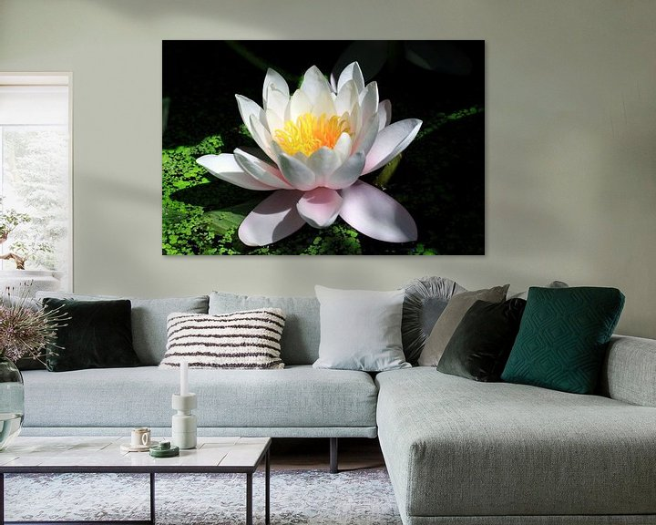 Sfeerimpressie: Witte waterlelie van Jolanta Mayerberg