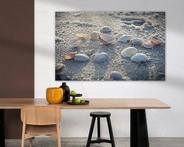seashells van Beate Zoellner