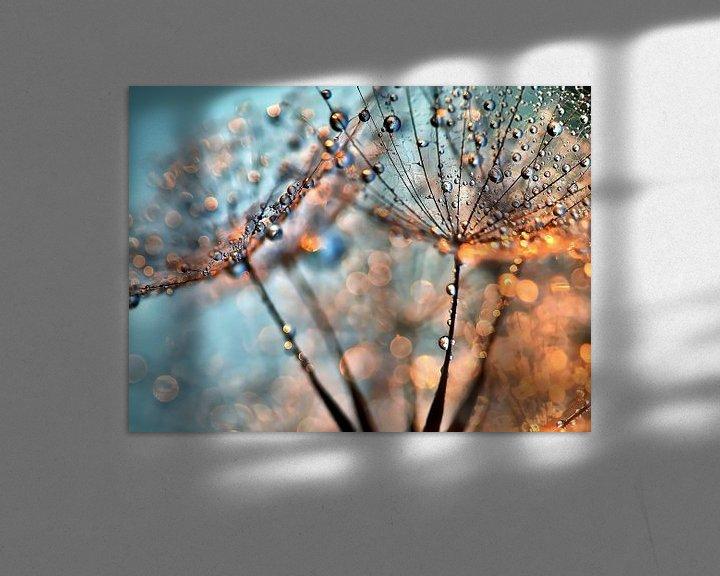 Impression: Pusteblume Lichtreflexe sur Julia Delgado