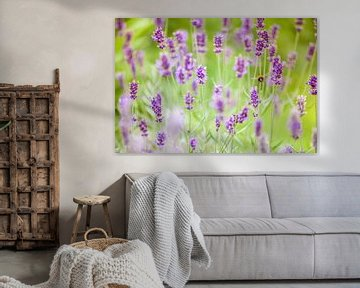 Biene in Lavendel von Shoots by Laura