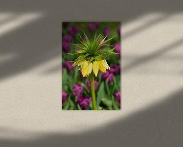 Tulpen klokjes van Bob de Bruin
