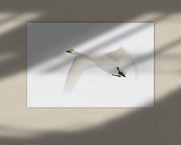 Wilde zwaan van Pim Leijen