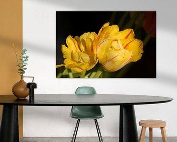 Gele tulpen  tegen een donkere achtergrond van Margot van den Berg