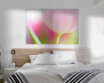 Tulp von Judith Borremans