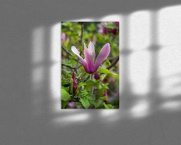 Bloeiende Magnolia van Margot van den Berg