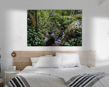 Monteverde; de magie van mist en regenwoud sur Aad Clemens