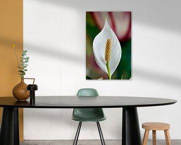 Lepelplant van Sjoerd van der Meij