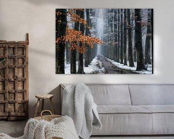 First snow, last leaves van Lars van de Goor